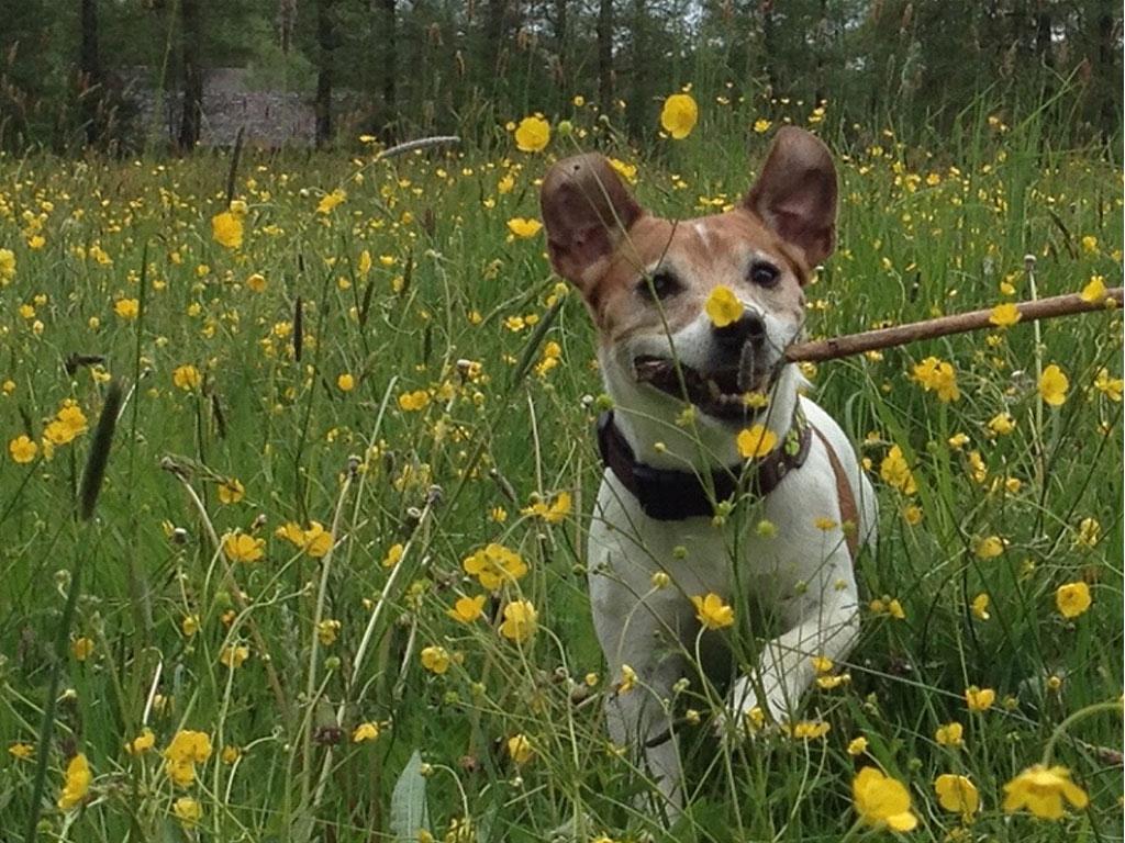 Ferienwohnungen mit Hunden an der Ostsee