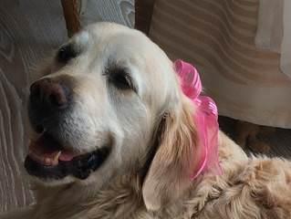Emily ferienwohnungen in binz auf r gen for Urlaub auf juist mit hund