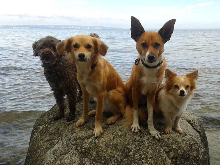 Kurzurlaub in Binz auf Rügen in exklusiven Appartements für Hunde
