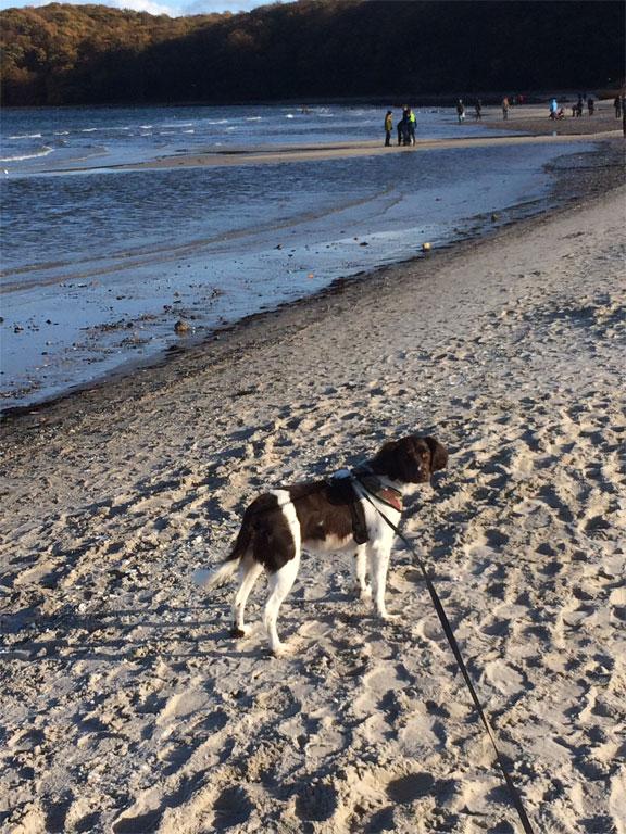 Strandspaziergang mit Hund in Binz auf der Insel Rügen
