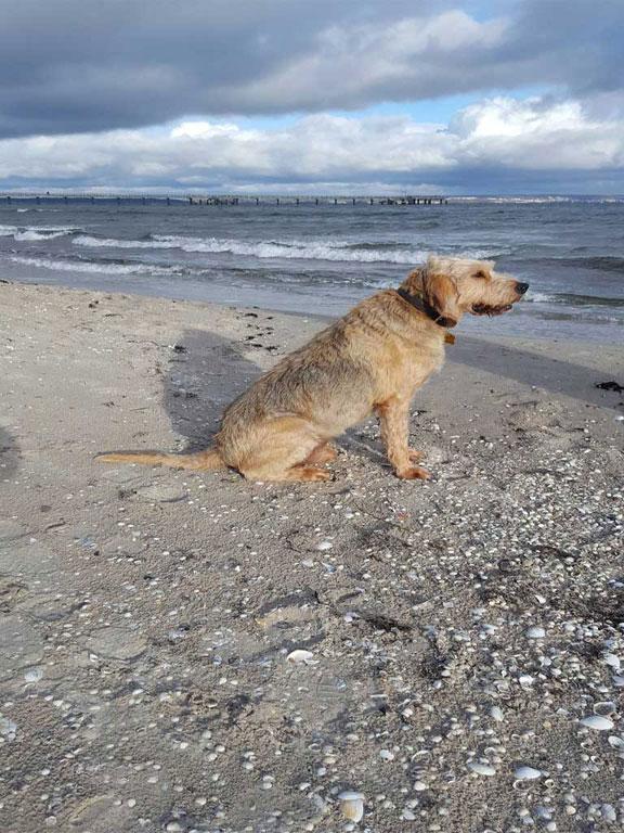 Der Geheimtipp sind usnere Ferienwohnungen für Hundebesitzer in Binz uaf der Insel Rügen