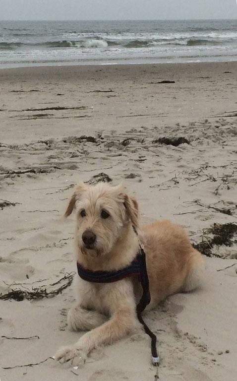 Ferienwohnungen für Hundebesitzer auf Rügen