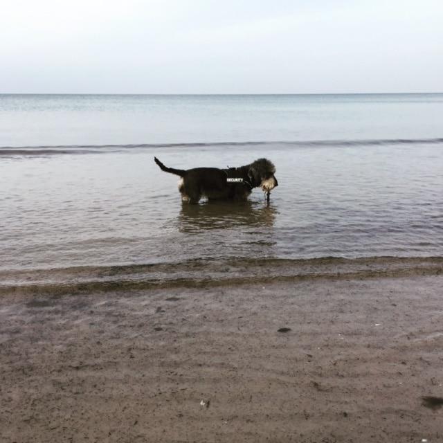 Mr Summer in der Ostsee am Hundestrand der Insel Rügen