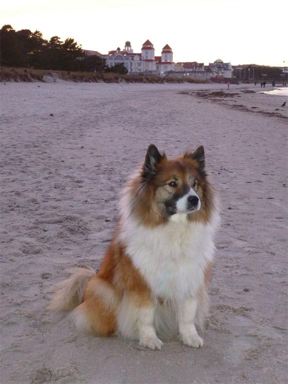Urlaub mit Hunden im Ostseebad Binz auf Rügen
