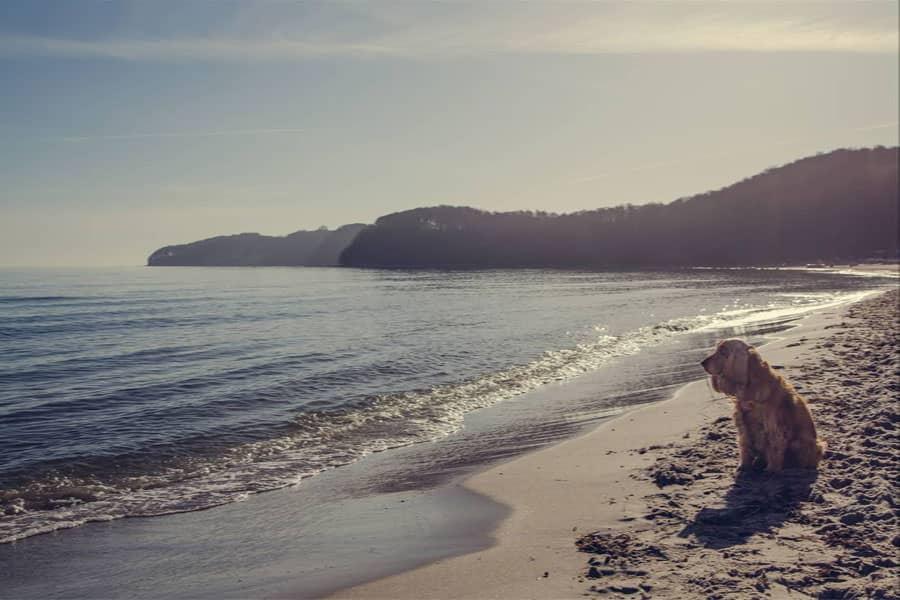 Ferienwohnungen mit Hunden in Binz auf Rügen