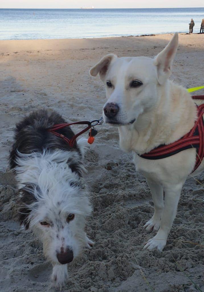 Blanka und Bicho Will